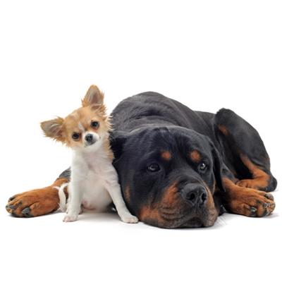 Mangimi per cani e gatti altissima qualit olistici for Miglior cibo per gatti