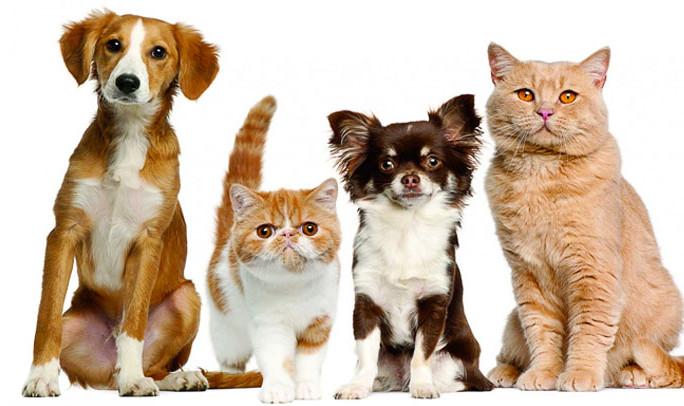 komepet vendita prodotti per cani e gatti