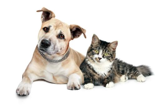 vendita migliori crocchette per cani e gatti