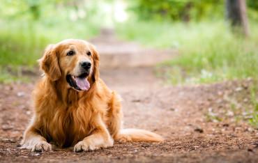 cibo per cani e gatti alta qualità