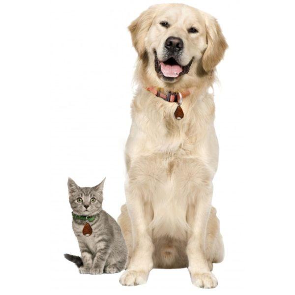 mangimi per cani e gatti