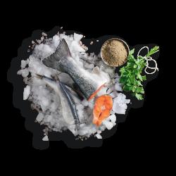 salmone e pesce di mare