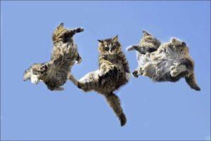 gatti-che-cadono