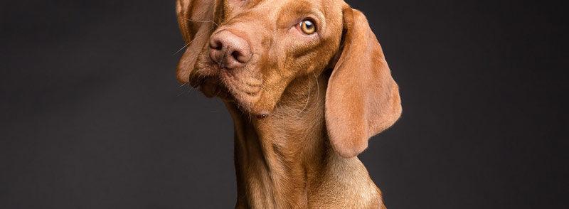 Il Cane Vomita
