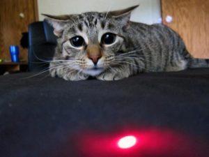 gatto insegue
